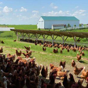 Philip Yoder farm
