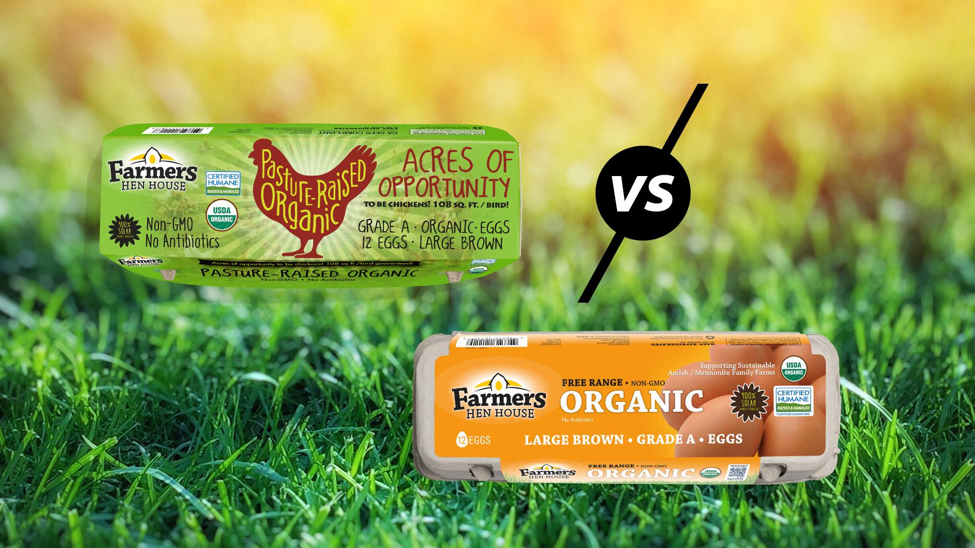 pasture-raised eggs vs free-range eggs